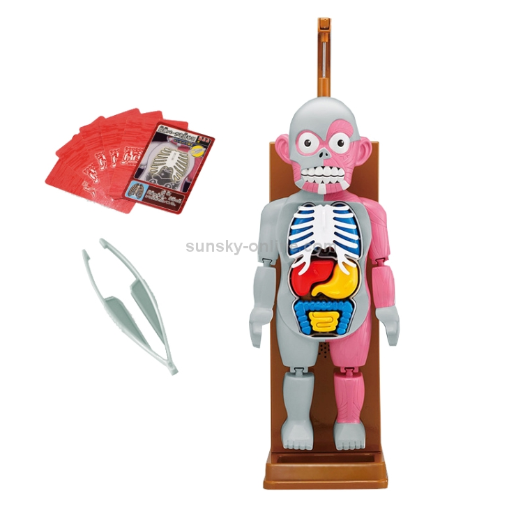 Human Body Model w// Removable Organs Prank Scary Tricky Toy Halloween Party