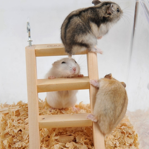 Buy Hamster toy Wooden Ladder Climbing, Random Color Delivery, Size: 15*7*2cm for $2.73 in SUNSKY store