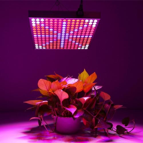 LED6175